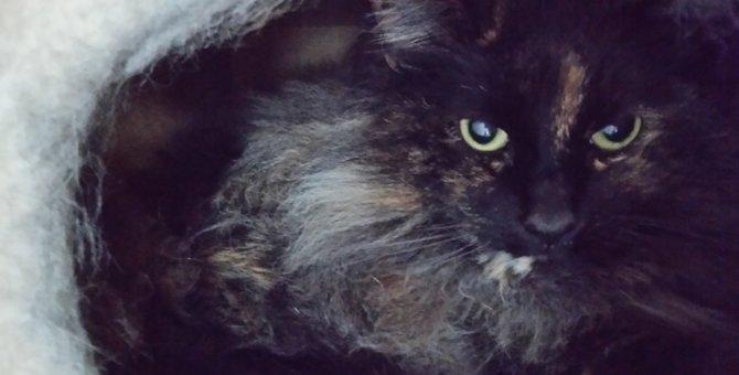 猫の8歳は高齢期!現れる老化現象とケアの方法