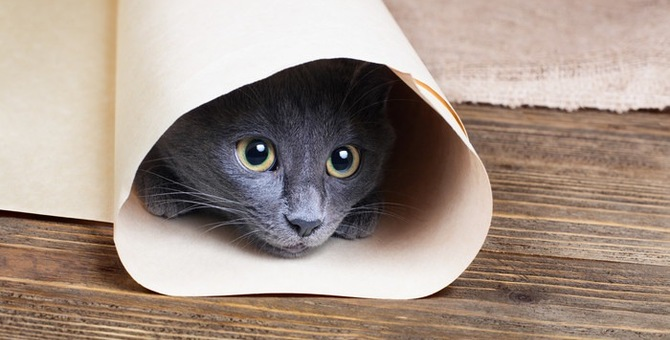 猫がトンネルを好む理由とおすすめのタイプ
