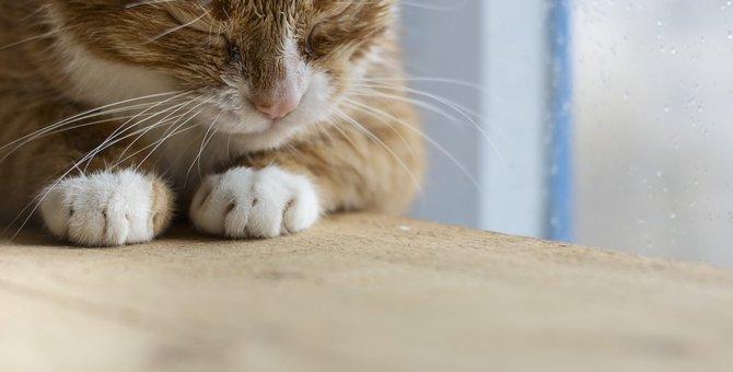 猫も低気圧で体調を崩す?お家で出来る対策