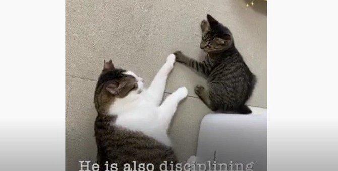 公園で虐待を受けていた猫をレスキュー。シェルターで子守役として活躍!