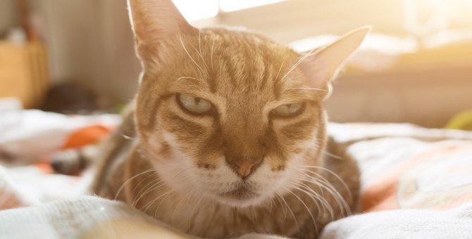 猫が『好きじゃない人』に見せる態度や行動5つ