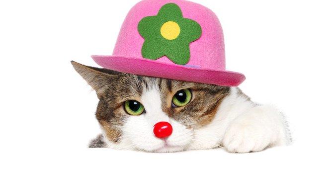 猫のサーカスとは!ロシア国立のサーカス団の驚きのパフォーマンス!