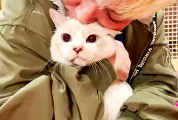癌治療のため愛猫を託す…深刻化するペット問題のリアルとは?