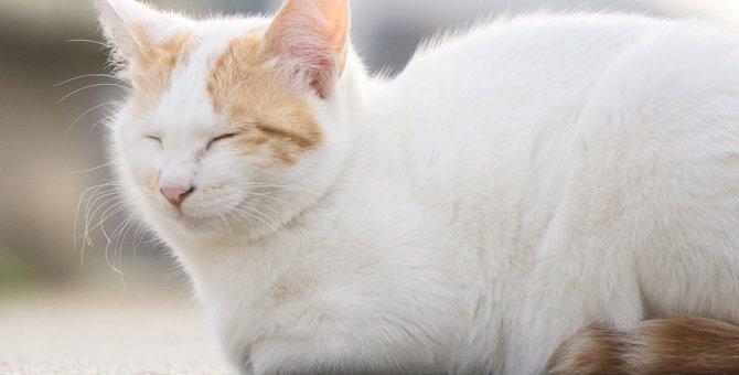猫の毛艶が良くない原因とその対処法4つ