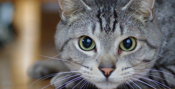 猫が『苦しそうにしている時』に考えられる原因4つ