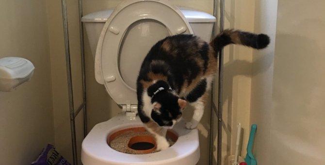 猫のトイレトレーニングで使える「リッターキッター」とは?