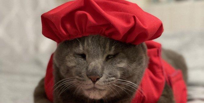 猫は何歳で『還暦』を迎えるの?おすすめのお祝い方法5つ