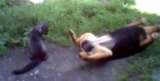 戦うまでもにゃい...犬の予想外なポーズに戸惑う猫ちゃん