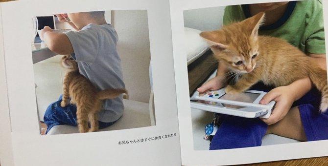298円で愛猫の写真集が作れる?今話題の「しまうまプリント」
