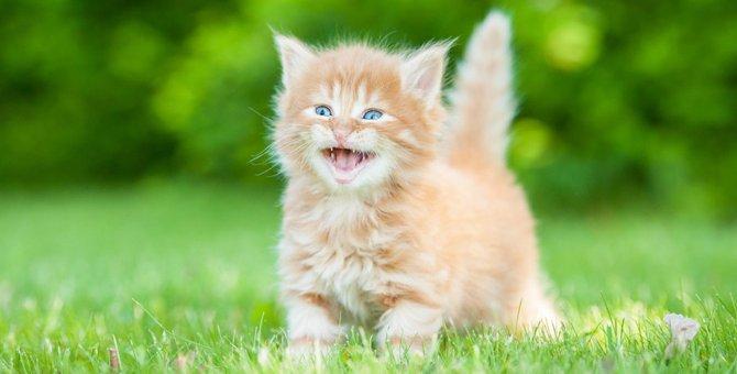 猫も笑顔をみせる?嬉しい時や楽しい時のしぐさとは