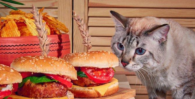 猫にハンバーグを与えてはいけない!食べてしまった時の対処法