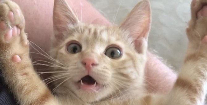 猫が楽しみにしていること5つ