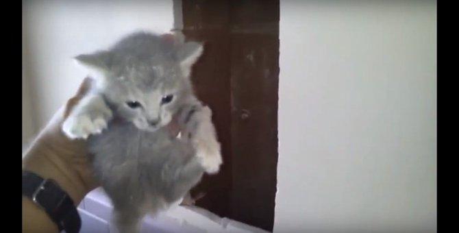 トイレの壁から子猫の鳴き声?優しい家主による決死の救出作戦