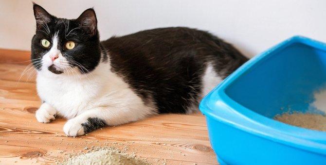 夏に『猫トイレの臭いがきつくなる』ワケ4つと対策