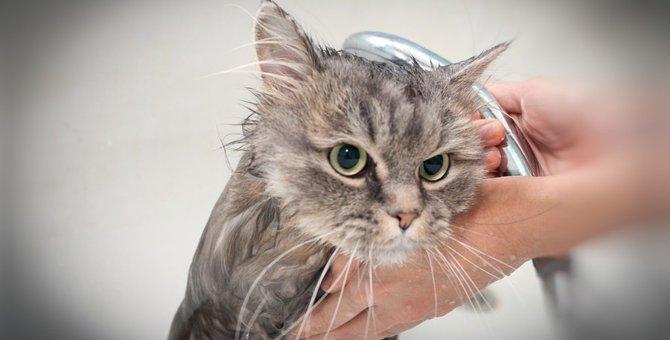 猫を入浴させる方法とその際の注意点