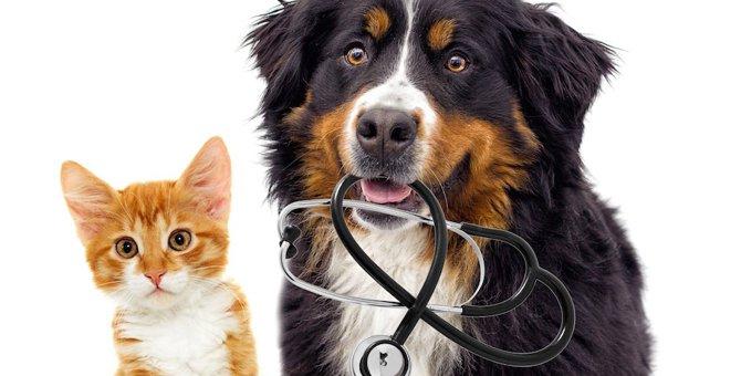 犬と猫の寿命長いのはどっち?