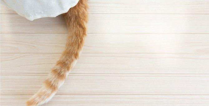 猫がパタパタと『しっぽを床に打ちつけている』ときの気持ち3つ