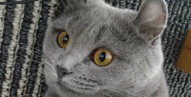 不調の可能性も…!猫がずっとゴロゴロと鳴き続ける理由4つ
