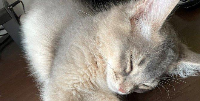 『仕事なんて…』生後3ヵ月の子猫さんからの誘惑が話題に♡