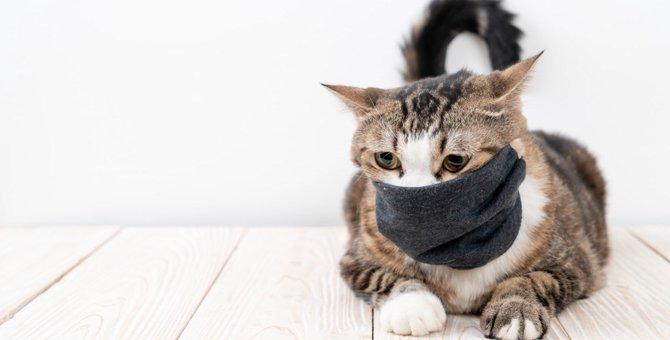 猫の『咳』の原因は?考えられる病気5つと対処法