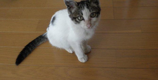 愛猫マオと出会えたいくつもの偶然に感謝