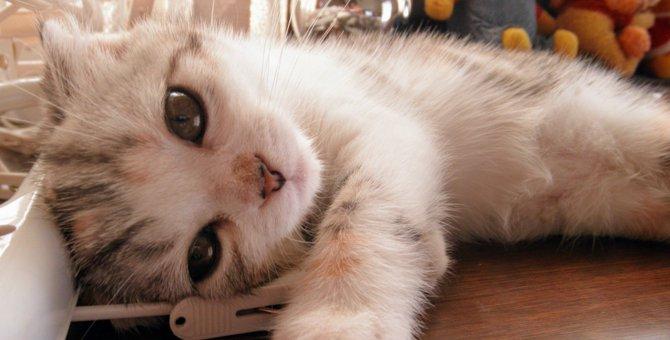 撫でようとしたら逃げた…猫がツンデレする理由3つ