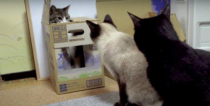 ダンボールからお顔がひょっこり!バレてないようで実はバレてる猫ちゃん…?