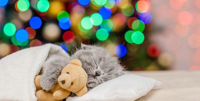 コリラックマと猫のコラボレーション「コリラックマキャット」かわいい商品7選