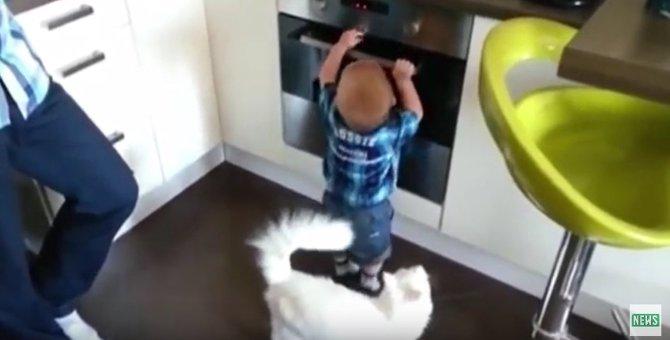 「触っちゃ危ないよ」オーブンにイタズラする男の子を注意する猫さん