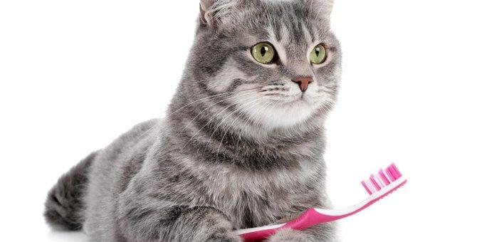 人間の虫歯は猫にもうつる?ねこのお口トラブルについて