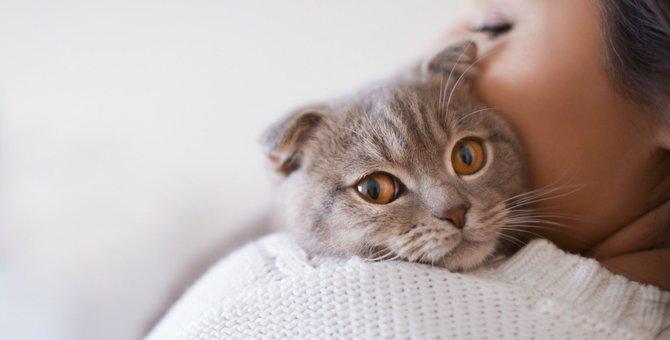 猫に嫌われたら…?信頼関係を修復する4つの方法