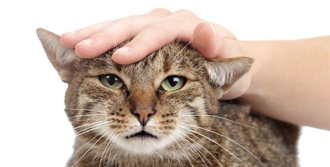 猫が急にゴロゴロ言わなくなる理由4つ