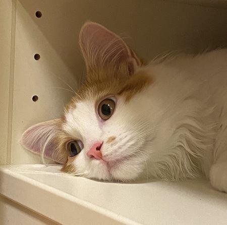 愛猫に無視されるとき、考えられる原因4つ