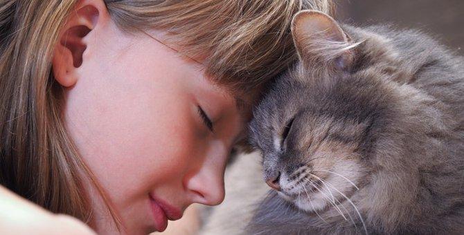 にゃんこは子供嫌い?答えはNO!我が家で実践した『猫と子供が仲良くなる方法 』