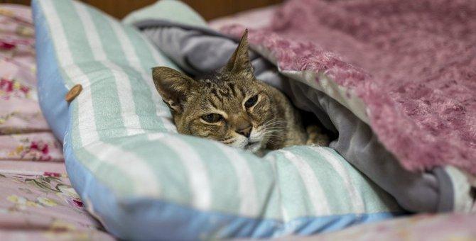 老猫の最期を看取りたい。お別れで苦しませないためには
