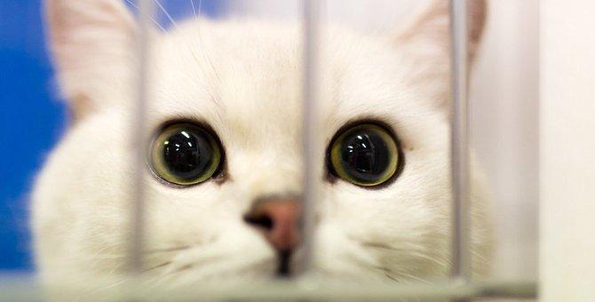 猫ケージの人気ランキングを1段、3段、4段ごとにご紹介