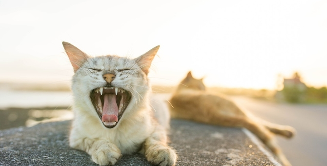 野良猫の寿命が短い理由とその対策