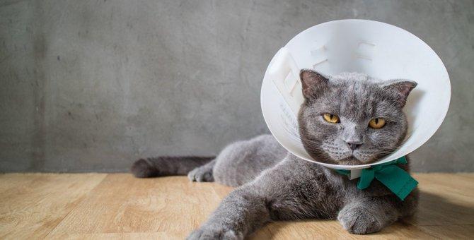 猫が『傷口を舐めてしまう』ときの対処法2つ