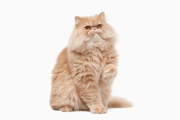 ハーマイオニーが飼っている猫とは!ハリーポッターシリーズに登場する猫