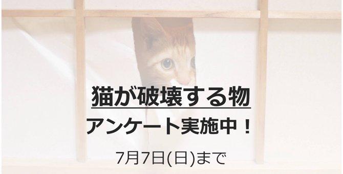 終了しました【アンケート調査】愛猫が破壊したものについて