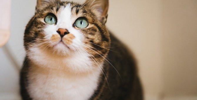 猫が飼い主の後をついてくるのはなぜ?4つの理由と気をつけたい事もチェック!