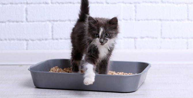 猫が謎行動『うんこダッシュ』をする理由4つ