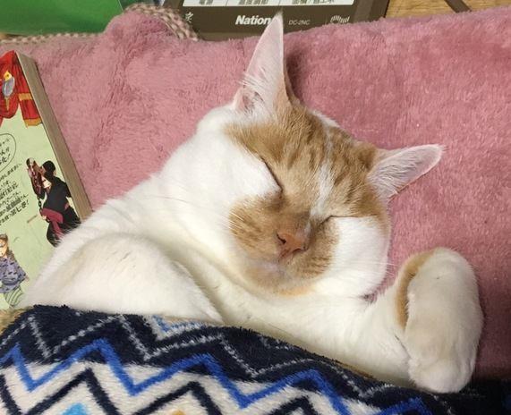猫の寝相から読み取る心理7つ
