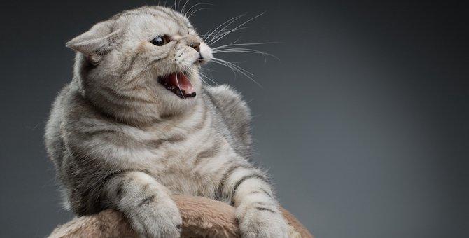 猫の声がかすれる原因と考えられる病気