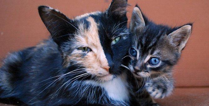 知ってる?猫の珍しい柄8選