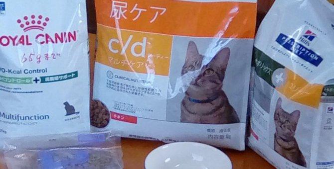 キャットフードは何をどこで買う?膀胱炎になった猫に与えているキャットフード