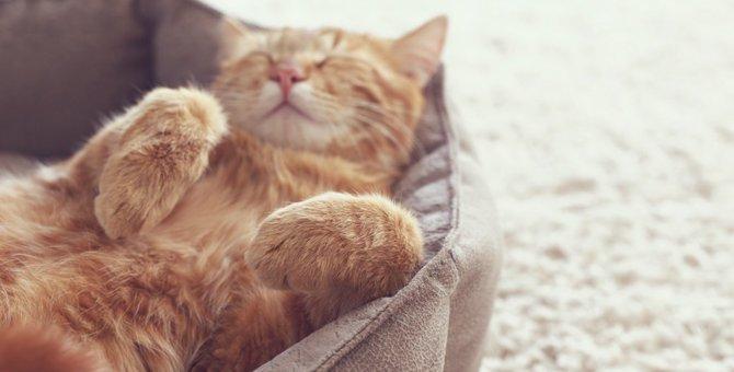 猫が好むベッドの選び方とその置き場所
