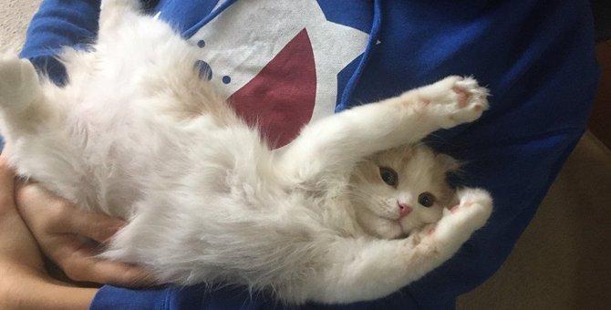 「お客さま大好き♡」な猫に育てる方法3つ