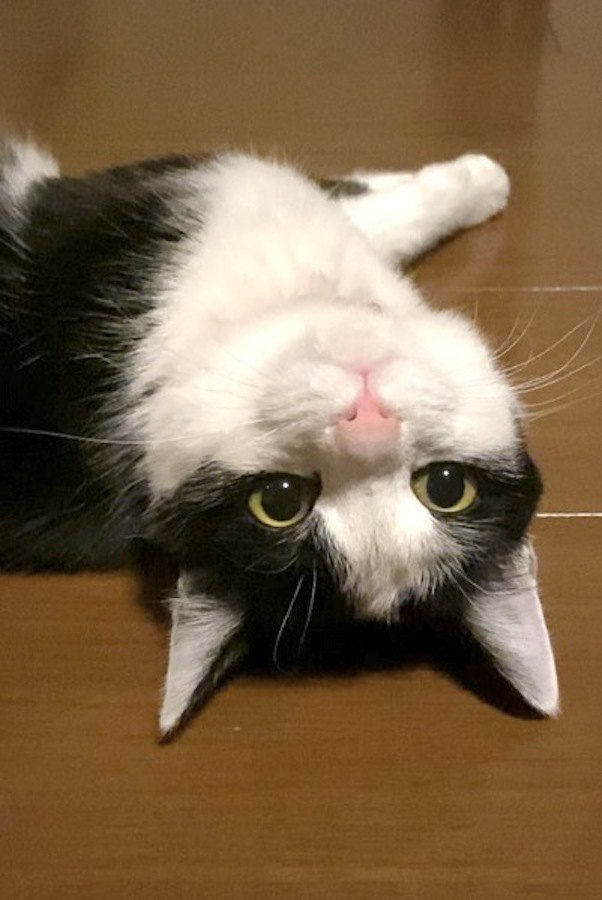 猫が真似しがちなこと3つ