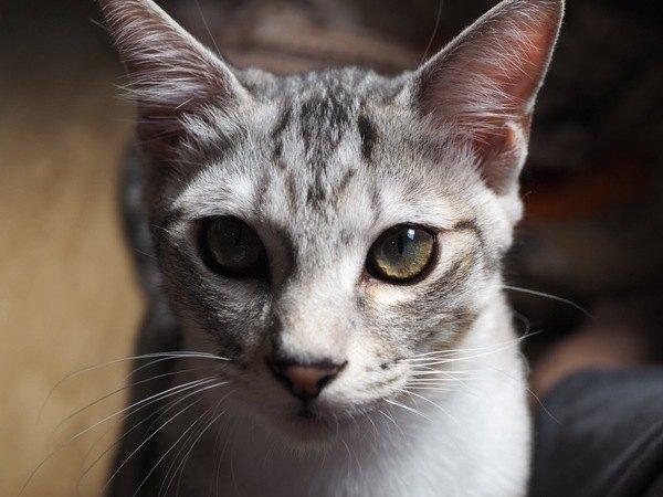 猫が背筋を伸ばして座っている時の心理とは?